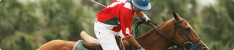 Polo equipment, online shop